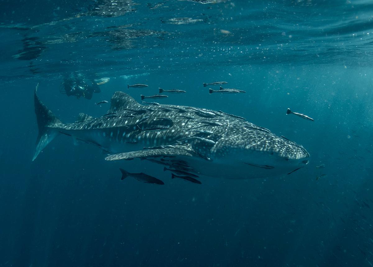 Kripto Para Balinaları Ethereum (ETH) Satın Almaya Devam Ediyor